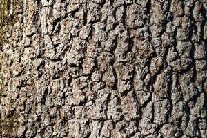 naturlig bakgrund gjord av en närbild av brunt träd foto