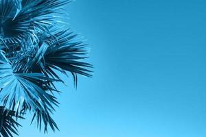 blå naturlig bakgrund med palmblad foto