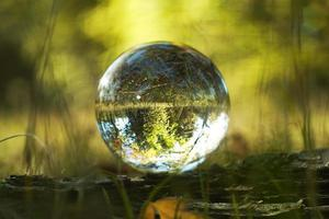 en linsboll i en höstskog foto