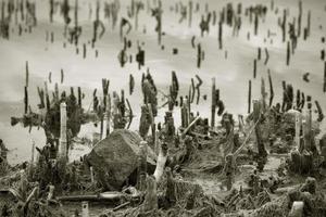 torra stjälkar vid sjön foto