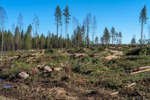avskogningsområde med virke och grenar på marken foto