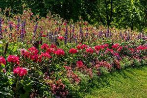 stor och färgglad blomsterrabatt i starkt solljus foto