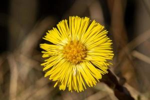 närbild av en gul blomma foto