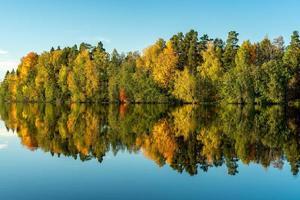 trädreflektion i vatten foto