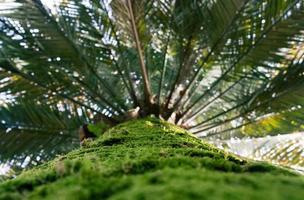 naturlig bakgrund med palmstam och löv foto