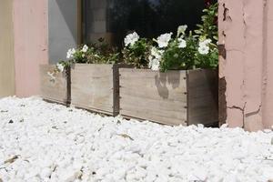 vita blommor i plywoodlådor på en bakgrund av stenar. foto