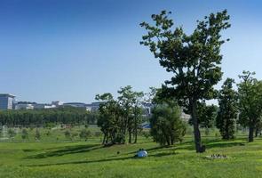 stadslandskap med grönt landskap och träd. foto