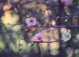 blommande trädgrenar på en suddig bakgrund foto