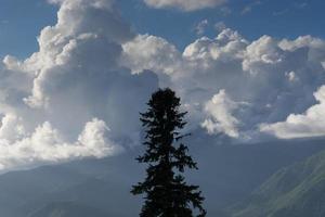 silhuett av träd mot bergslandskap foto