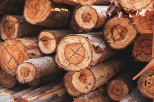 det klippta trädets bakgrundsstruktur foto