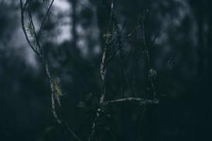 närbild av trädgrenar med en mörk ljus himmel foto
