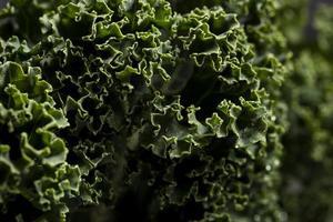närbild av grönkål foto
