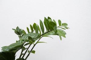 närbild av växtlöv foto