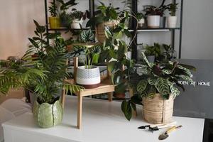 inomhus växter foto