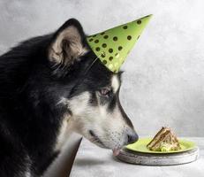 söt hund med tårta foto