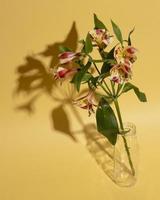 blomningblomma i vas på bordet foto