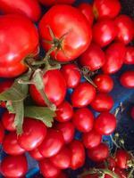 hög med färska tomater foto