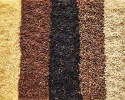 uppsättning av olika ris som bakgrund - svart, basmati, brunt och rött blandat ris foto