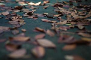 textur och bakgrund selektivt fokus för de torkade bladen på den våta cementmarken med suddig förgrund foto