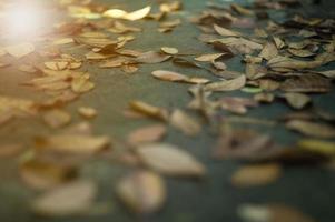 struktur och bakgrund selektivt fokus för de torkade bladen på den våta cementmarken med solig suddig förgrund foto