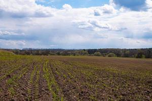 plöjt fält och moln på våren foto