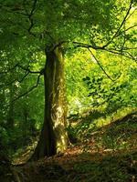 skuggigt bokträd med fläckigt solljus foto