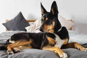 bedårande hund på sängen hemma foto