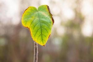 ett blad i skogen foto