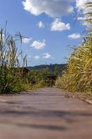 avdelning för fält av promenad väg till hus och moln bakgrund. foto
