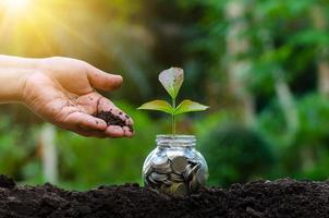 hand sätta pengar flaskan sedlar träd bild av sedel med växten växer på toppen för företagets gröna naturliga bakgrund pengarsparande och investering finansiella koncept foto