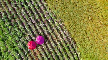 blommaträdgård bakgrund med vackra färgglada paraplyer foto