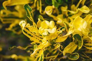 gul blad bakgrund. foto