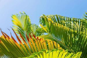 bakgrunden lämnar av palmer och himlen, sommar koncept. foto