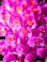 orkidé i naturen foto