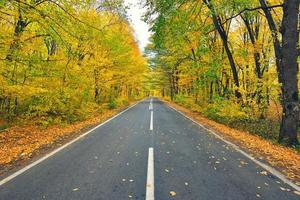 smal slingrande väg i gul höstskog med fallna löv på vägen foto