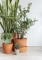 kaktus sansevieria husplanter foto