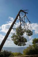 stormskador och trasigt träd i skogen foto