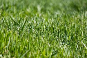 gräsmatta närbild grönt gräs bakgrund med fokuspunkt foto