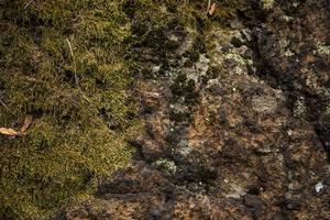 vacker mossa och lavtäckt sten foto
