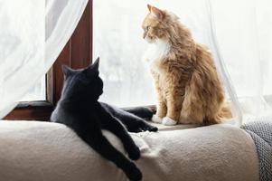 söta katter som lägger inomhus hemma foto