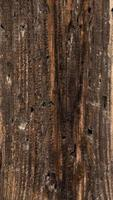vertikala trä textur bakgrund gamla paneler foto