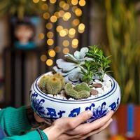 man som håller terrariumväxt med bokehbakgrund foto