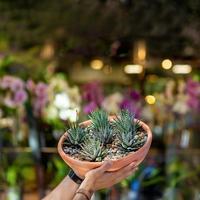 man som håller terrariumväxt med suddighetsbakgrund foto