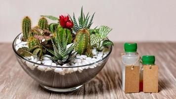 terrariumväxt med växtdroger vitamin foto