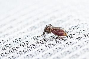 mygga på nära håll foto
