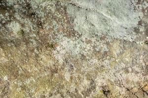 sandsten stenar med mossa och lav bevuxna som bakgrund foto