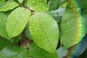 regndroppar på de gröna växterna lämnar under regniga dagar foto