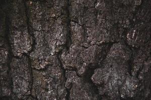textur bakgrund av brun trädbark foto