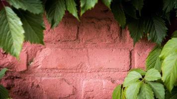 gammal tegelvägg med en grön vinstockram med kopieringsutrymme för att skriva foto