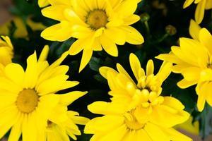 ovanifrån på en bukett med gula blommor med ett orange centrum foto